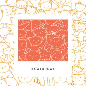 Saturday is Caturday